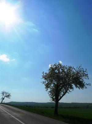 slunce a květy stromů
