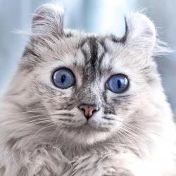 Americké ženy kočička fotky